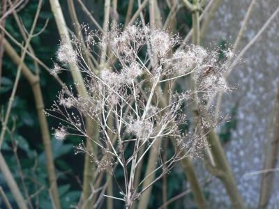 frozenflower.jpg