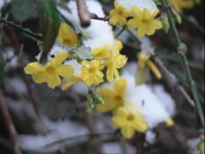 snowandflowers.jpg