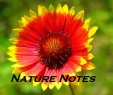 nature-note1.jpg.jpeg