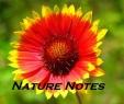 nature-note1.jpg.jpeg