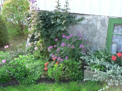 käringön-flowers.jpg