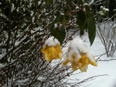 yellowroses.jpg