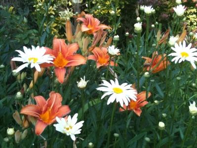 daisies-lilies.jpg