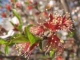 bloomingtrees.jpg